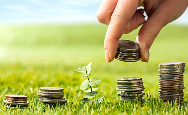 Колонны монет на зеленой траве и росток жимолости